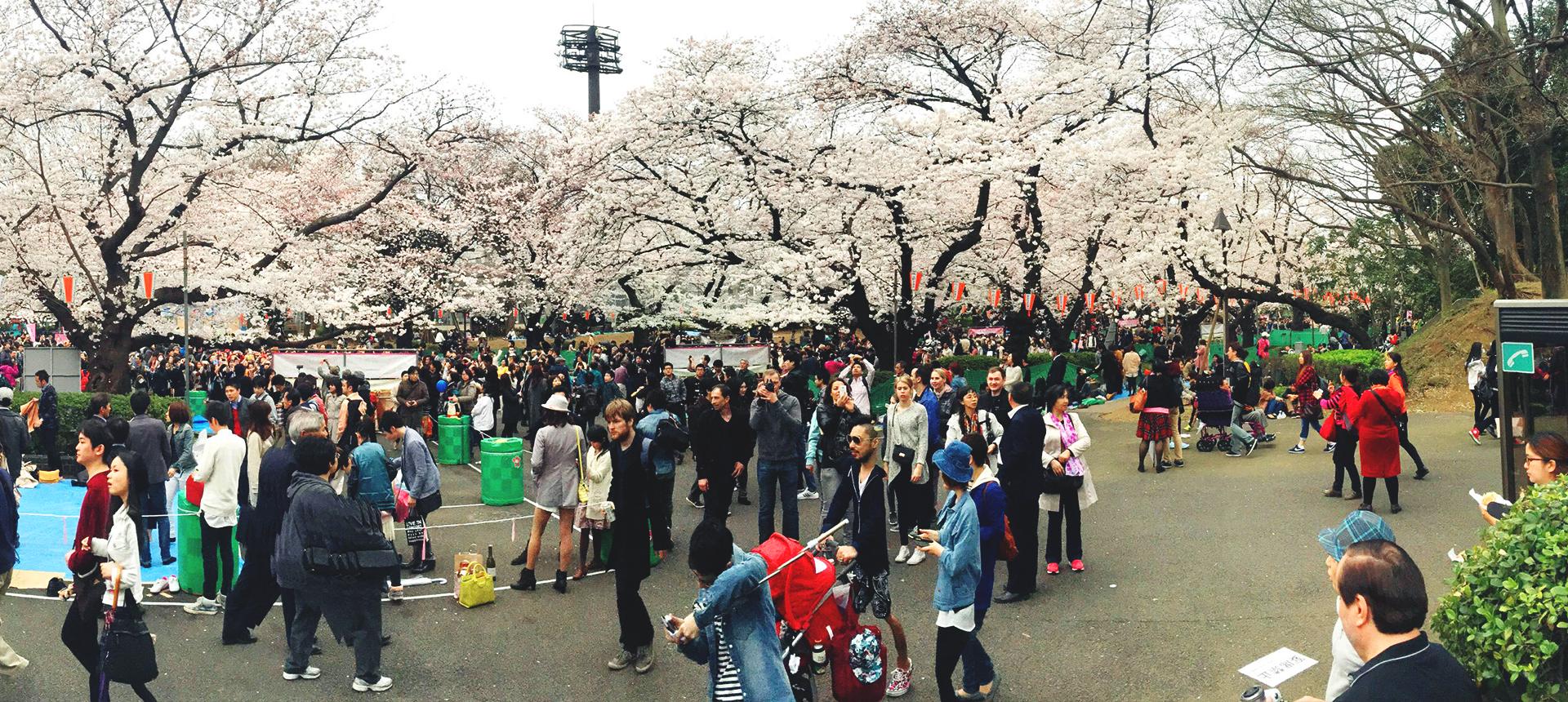 上野公園 国际善邻学院